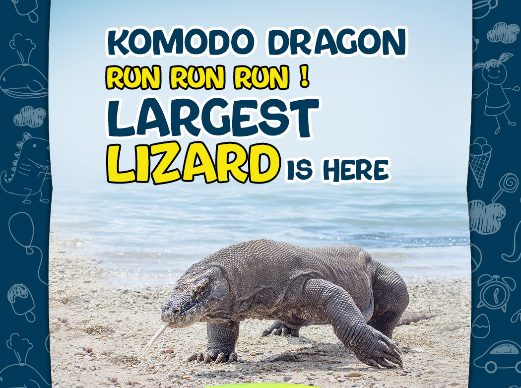 The largest lizard in the world