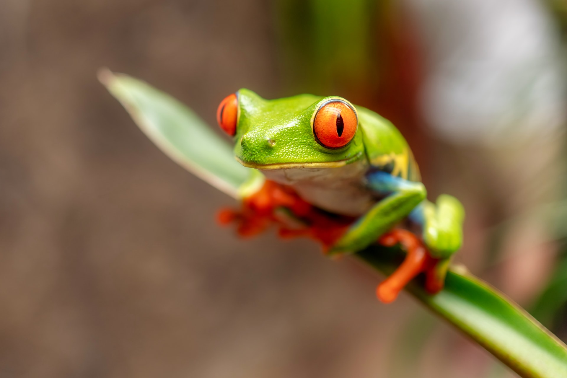 The Frogs Quiz